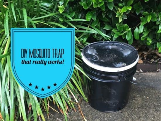 DIY Mosquito Trap with a 3 or 5 Gallon Bucket - Gardening Channel