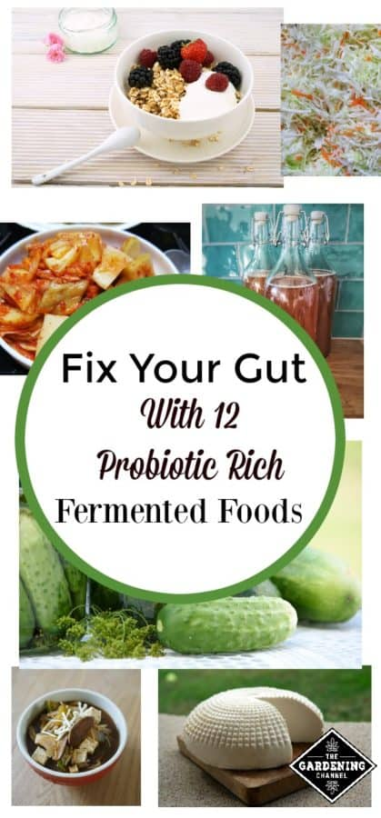 Fix Your Gut with these 12 fermented foods