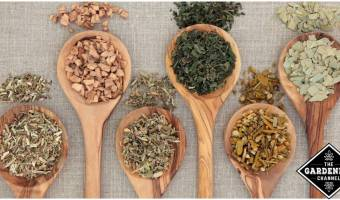 Herbs to Improve Gut Health