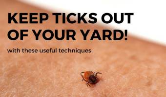 Keep ticks out of your yard and garden