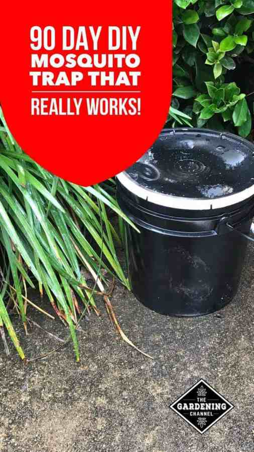 DIY Mosquito Trap with a 3 or 5 Gallon Bucket
