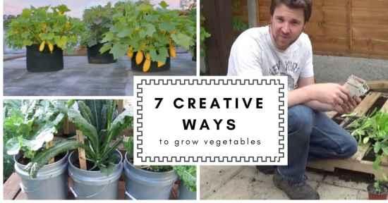 7 creative ways to grow vegetables