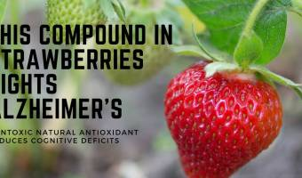 This compound in strawberries fights neurodegenerative diseases