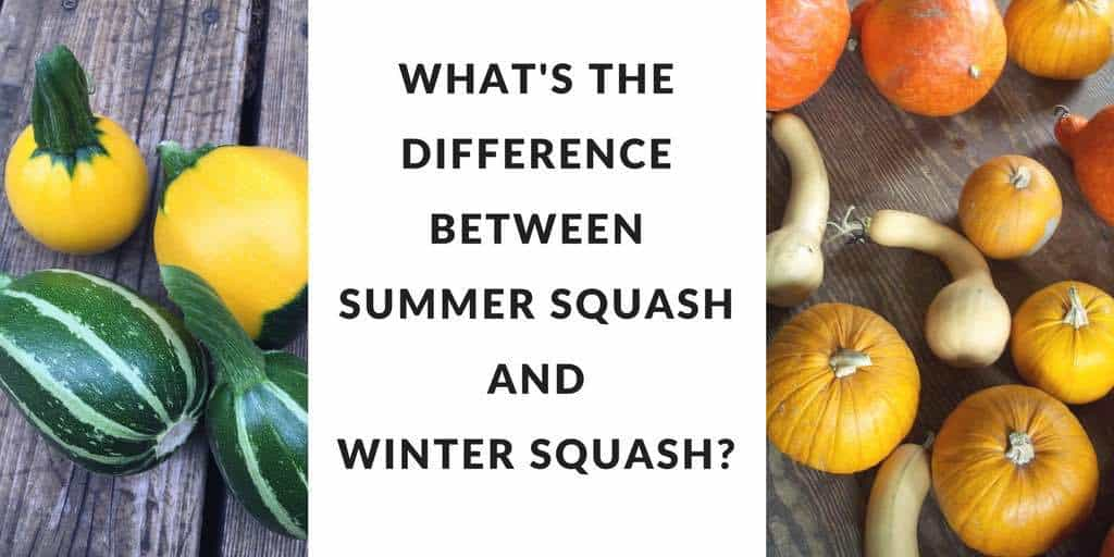 What S The Difference Between Summer And Winter Squash Anyway