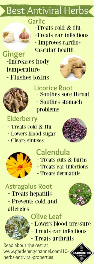 Herbs with antiviral properties