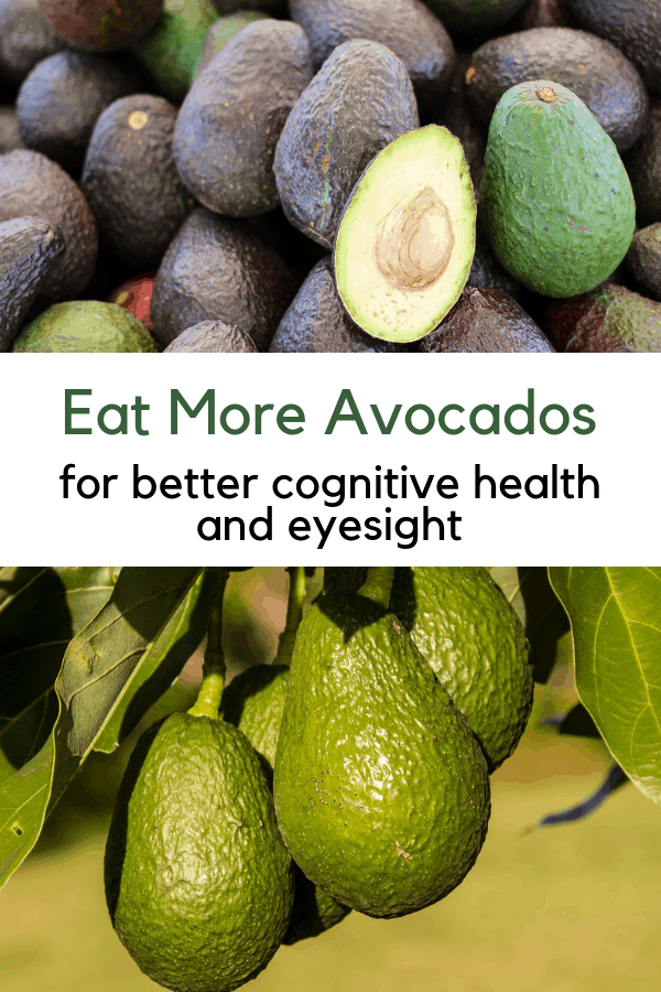 harvested avocados and avocado tree with text overlay eat more avocados for better cognitive health and eyesight