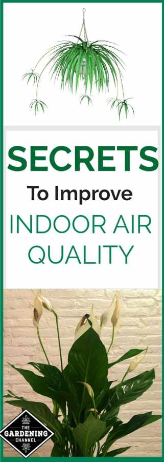 Top house plants for improving air quality gardening channel for Indoor plants for better air quality