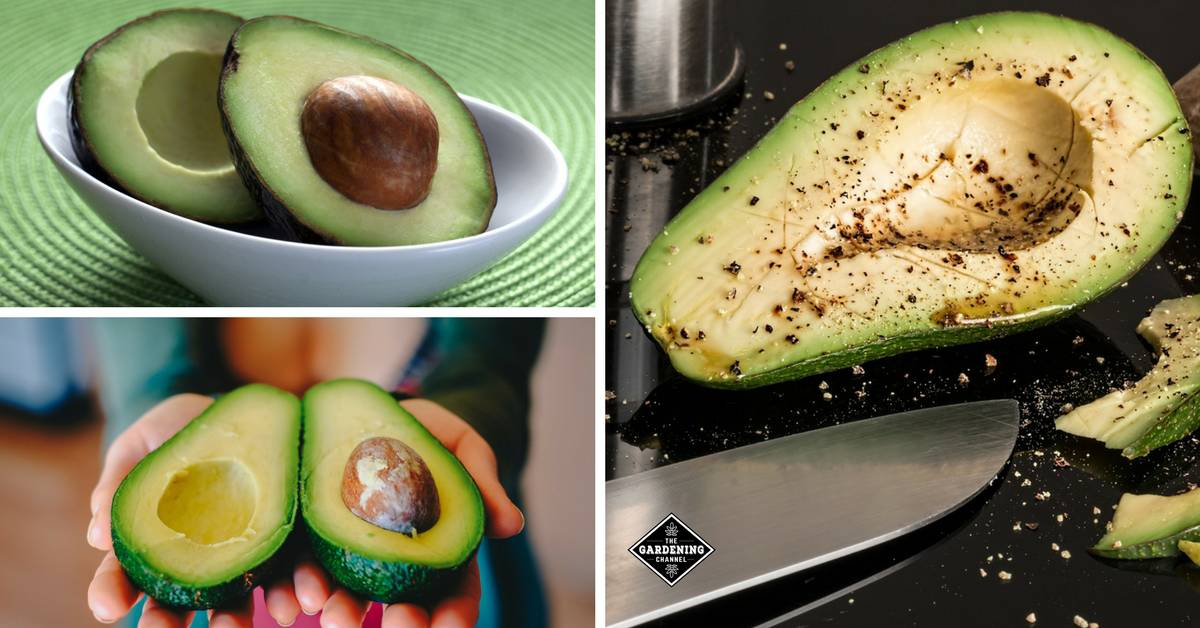 Avocado Consumption Increases Cognitive Health and Eyesight - Gardening  Channel