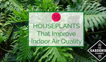Houseplants that improve air quality