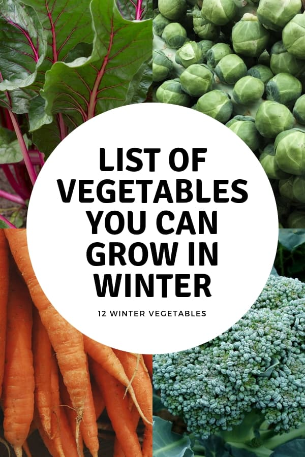 beets brussels sprouts carrots broccoli with text overlay List of Vegetables You Can Grow in Winter 12 winter vegetables