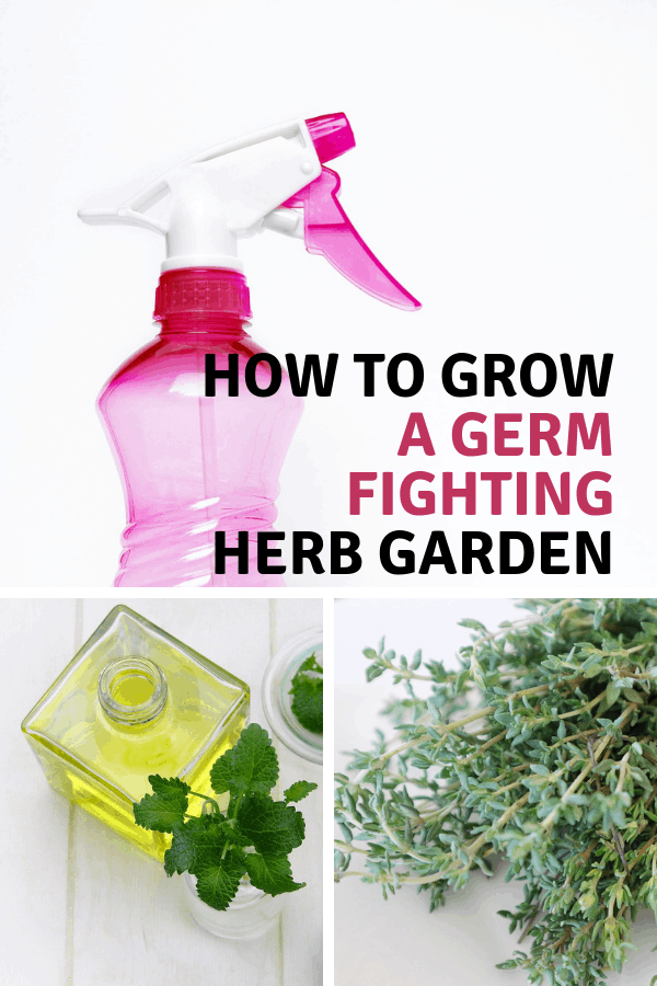 natural cleaner with essential oil and thyme with text overlay how to grow a germ fighting herb garden