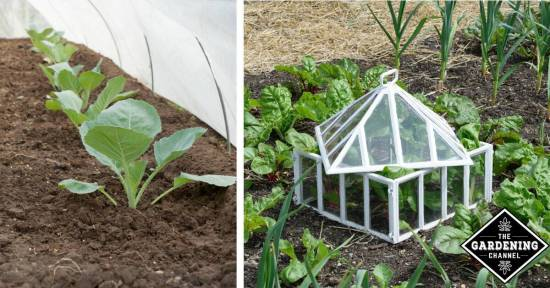 List of Vegetables You Can Grow in Winter