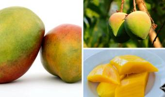 why eat mango