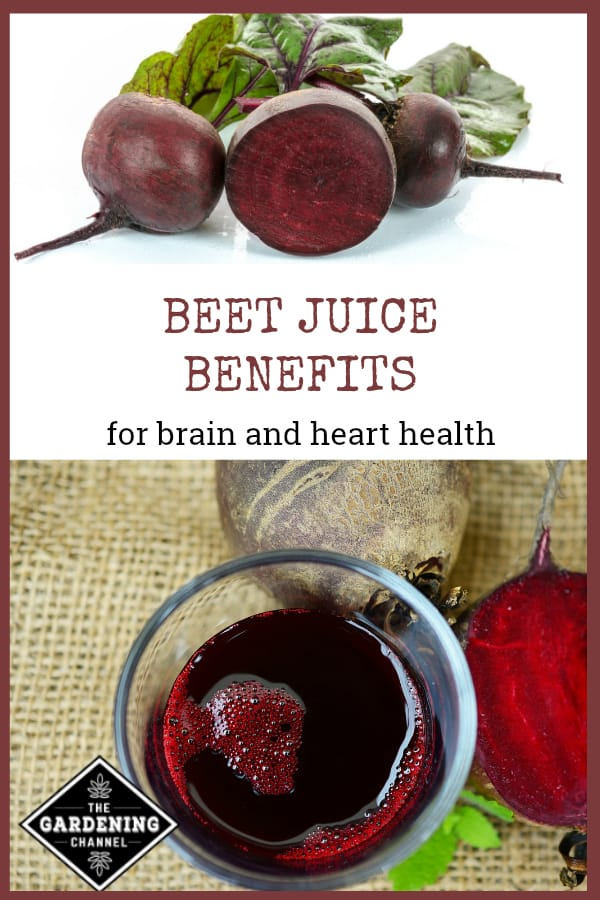 beets and juiced beets with text overlay beet juice benefits for brain and heart health