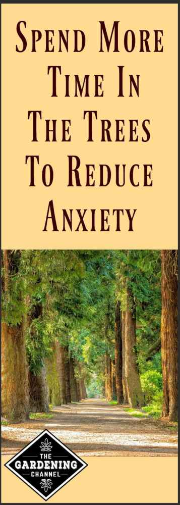 Spend time in nature to reduce stress and anxiety. No more excuses needed to spend more time in the garden.