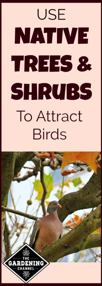 attract birds