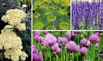 Herbs with beautiful blooms and flowers