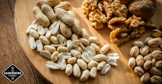 eat nuts for healthy brain