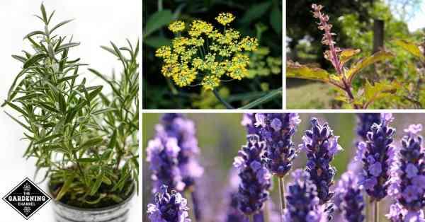14 Top Medicinal Herbs You Should Grow