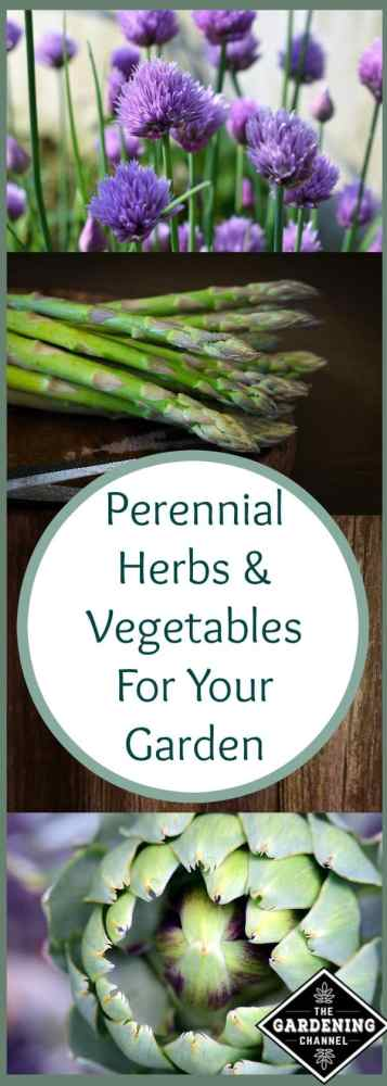 perennial herbs and vegetables