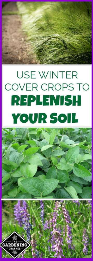 use winter cover crops