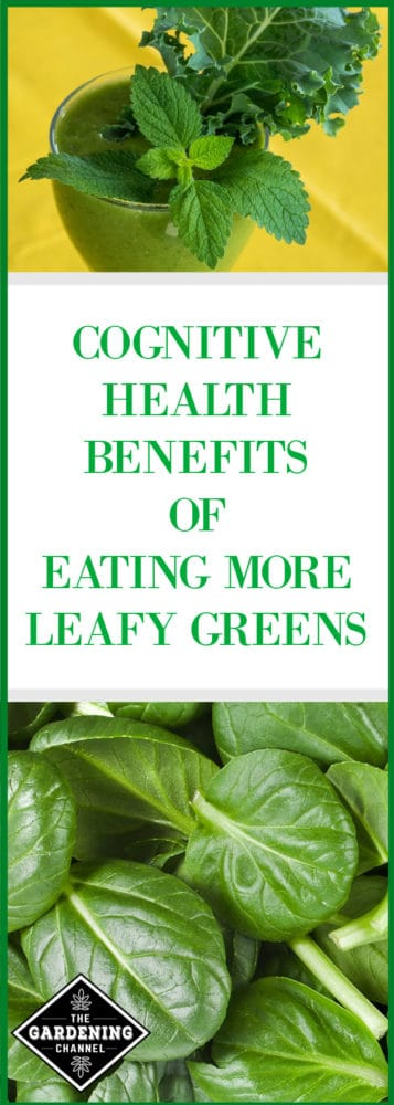 health benefits of leafy greens brain health
