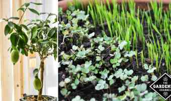 How to grow an indoor edible garden