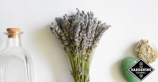 lavender for bedside to help with sleep