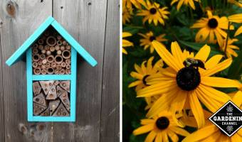 How to Build a Bee Habitat