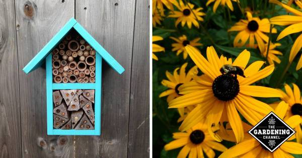 bee house and bee with black eyed susan