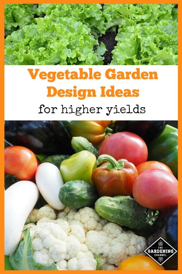 lettuce growing in garden and garden harvest with test overlay vegetable garden ideas for higher yields