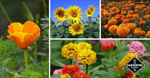 Which Flowers Grow The Fastest? Try These for Fast Results.