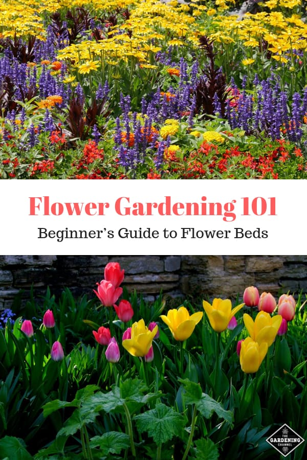 large flower garden and small flower bed with tulips with text overlay flower gardening 101 beginners guide to flower beds