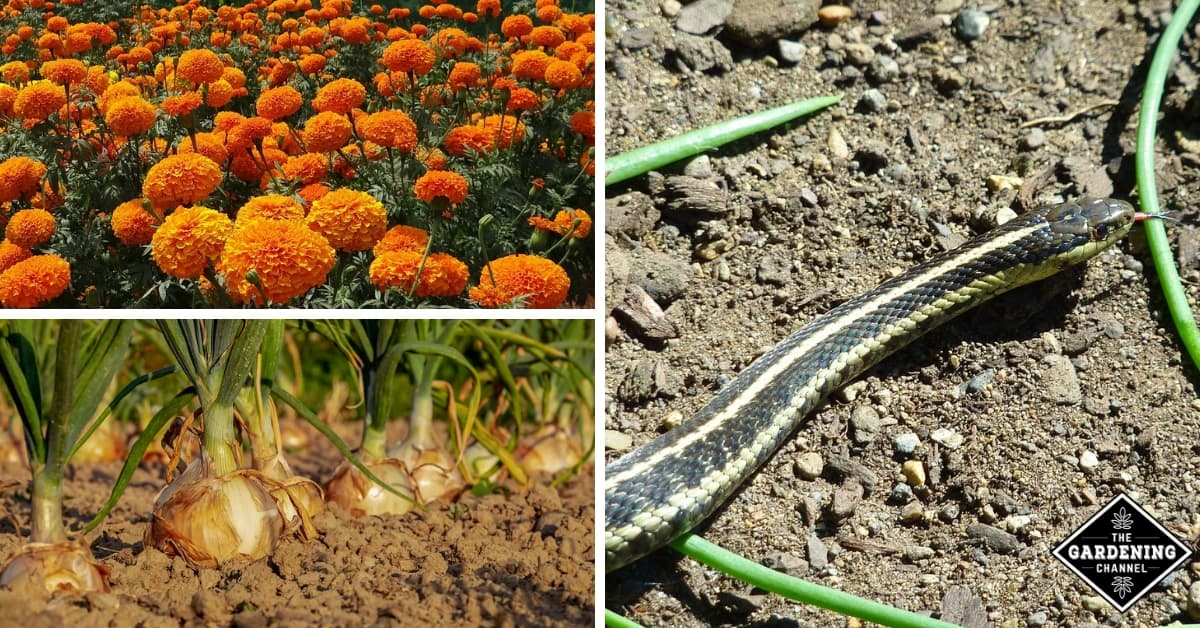 How To Keep Snakes Out Of Your Garden Gardening Channel