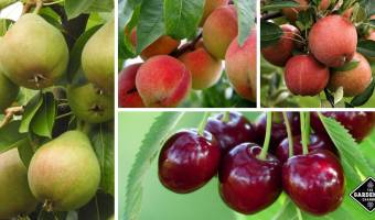 fruit tree growing tips