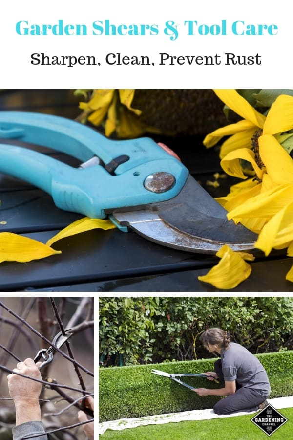 gardening tools shears trimmers with text overlay garden shears tool care sharpen clean prevent rust