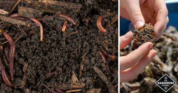 vericomposting