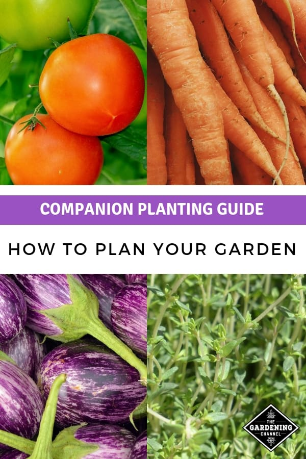 tomatoes carrots eggplant thyme with text overlay companion planting guide how to plan your garden
