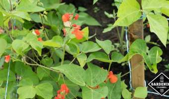 staking garden plants