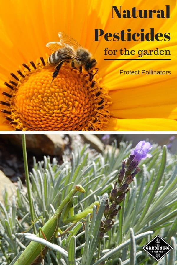 bee flower mantis lavender with text overlay natural pesticies for the garden protect pollinatos