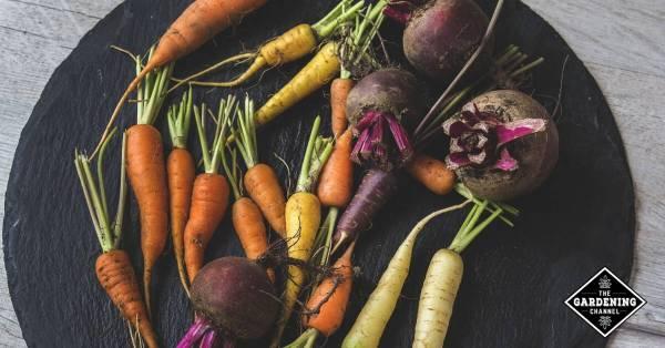 carrot recipes from fresh carrots