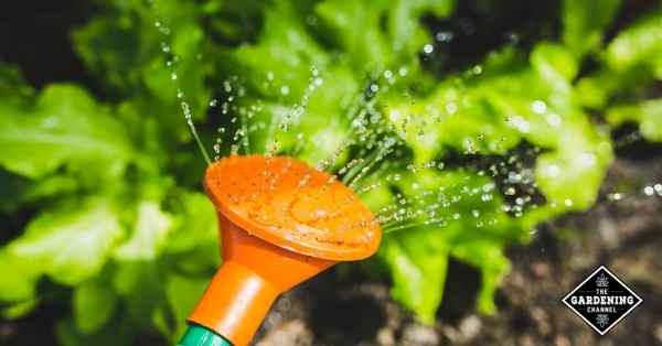 watering garden tips prevent disease