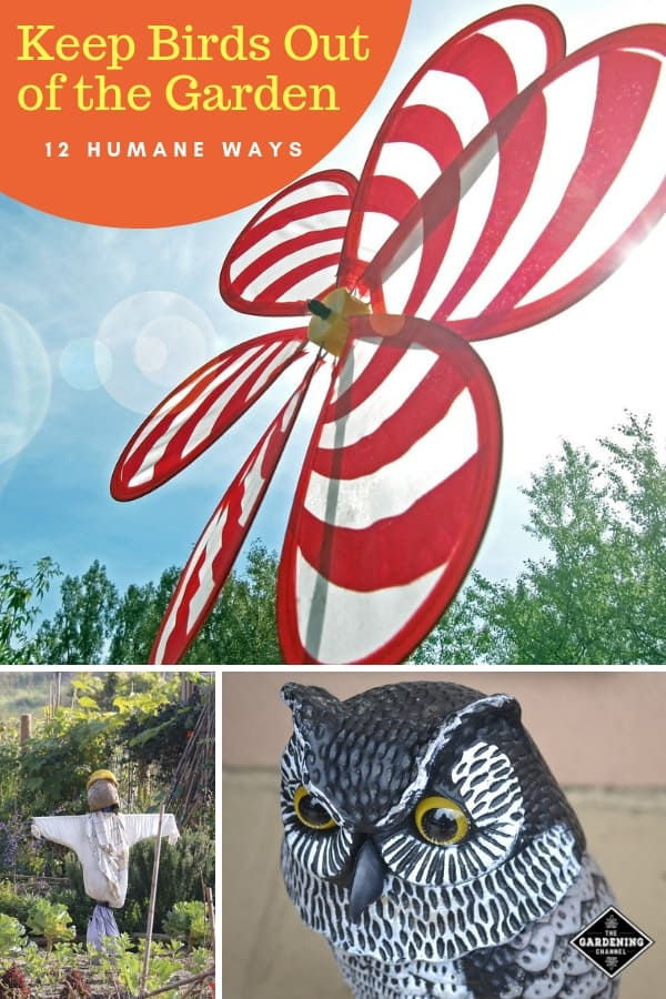 garden spinner scarecrow owl with text overlay keep birds out of the garden twelve humane ways