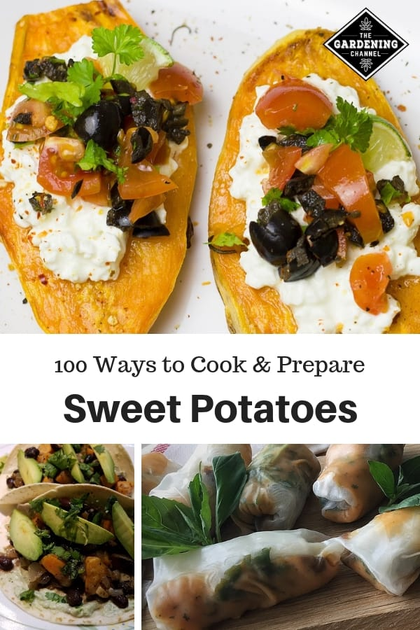 sweet potato tacos wraps slices with text overlay one hundred ways to cook and prepare sweet potatoes