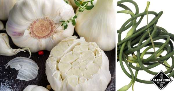 ways to cook garlic