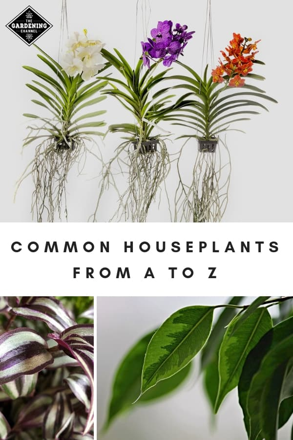 houseplants with text overlay common houseplants from a to z