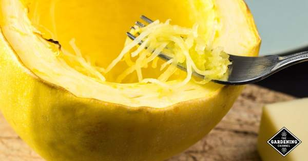 spaghetti squash recipes