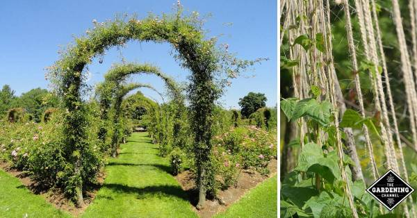 ways to use a trellis in yard and garden