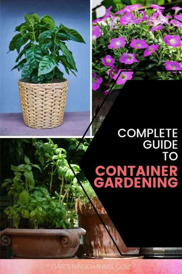 houseplants flowers herbs with text overlay complete guide to container gardening