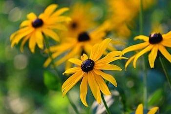 flower gardening perennials